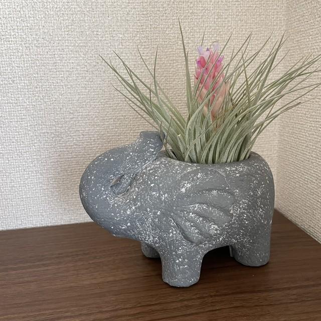 【送料込み】ぞうさんの植木鉢 動物プランター ゾウ 多肉植物 観葉植物 ガーデニング おうち時間 エスニック 母の日