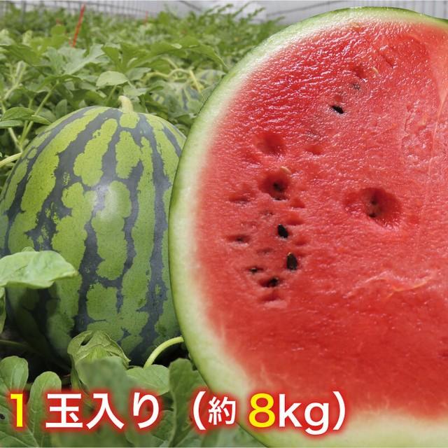 送料込【鳥取県北栄町産】すいか(進物)※7月16日まで! 1玉(約8kg)