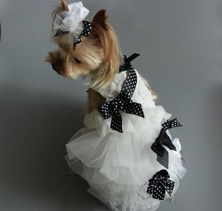 犬服オーダー ★水玉リボン付きウエディングドレス★
