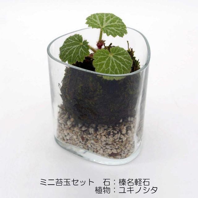 ミニ苔玉セット 石 榛名軽石 植物 ユキノシタ ボルミオリロッコ社製グラス