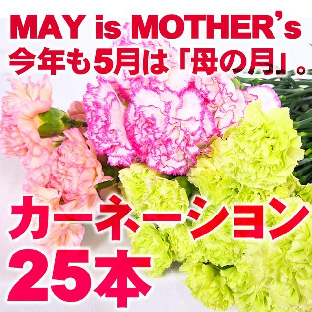 今年も5月は「母の月」★カーネーション 25本《MAY is MOTHER's》★フラワーロス支援