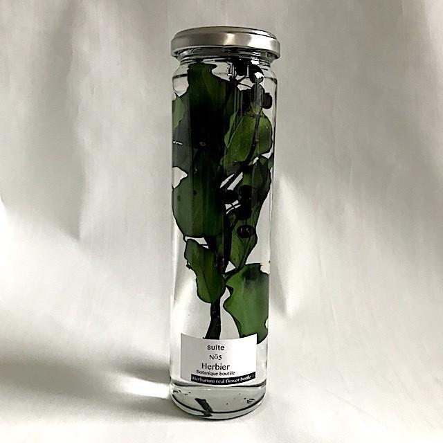 herbier NO5 green アイビー