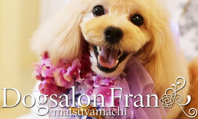 Dogsalon Fran(ドッグサロンフラン)