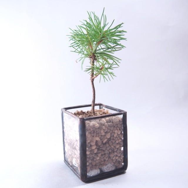 盆栽の精神を取り入れる。「BonTerior(ボンテリア)」が提案する新しい形のインテリアグリーン