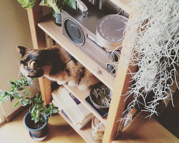 植物を取り入れた、お部屋作りをしてみよう