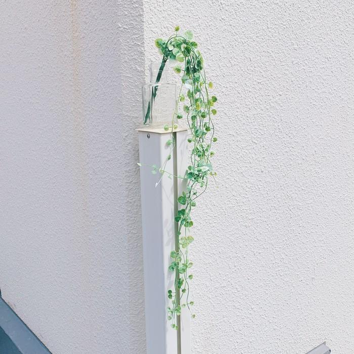 枯れない観葉植物・ハートカズラ