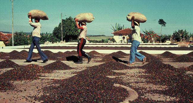 ブラジルのコーヒー文化について。リオ・オリンピックが開幕した今、ブラジルコーヒーを楽しみませんか?