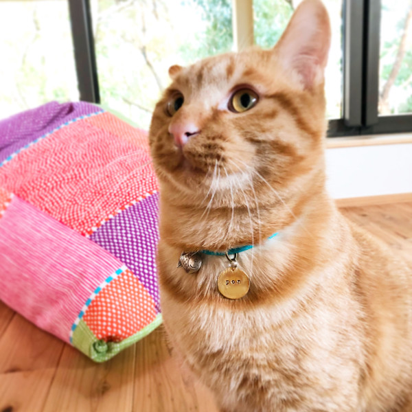 犬猫ペットの「もしも」に備えて作る『世界で一つだけの迷子札』