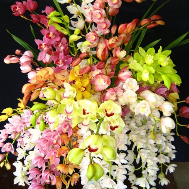 お部屋に彩りを与えませんか?人気の「シンビジューム」を様々なシーンに使える切り花でお届けします!