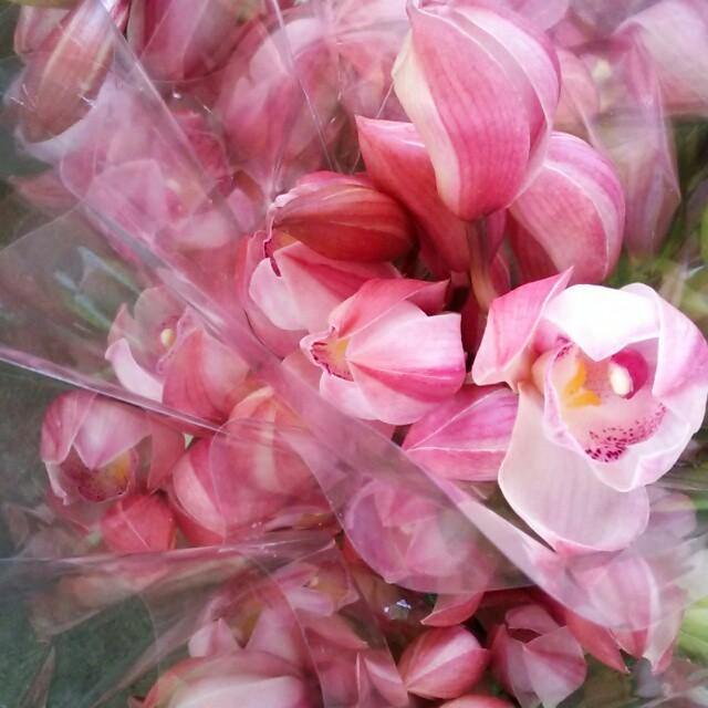 ピンクづくしでピンクずくめなピンク好きのための一箱♡『ラブインガール・プリマ』の花をたっぷりとお届け