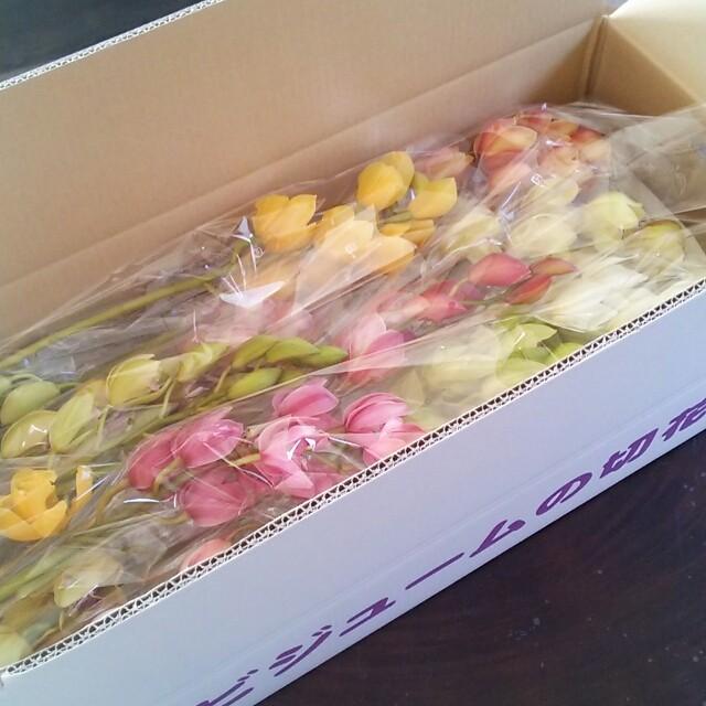 カラフルなシンビジュームに魅了された農家直送の花屋さん、花ずきんが生まれた話