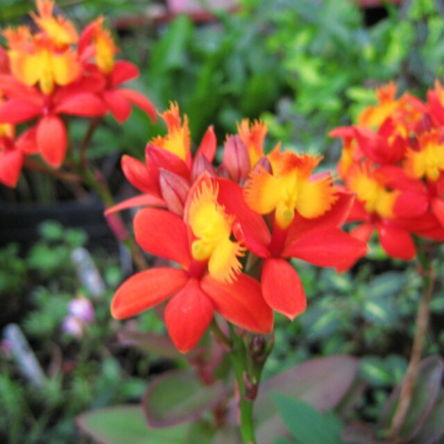 オンリーユー!!当園オリジナルのお花は切り花でも楽しめます!