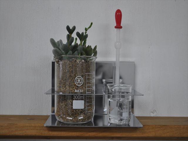 まるで実験!スポイトで水をあげて、ビーカーで育てるテラリウム