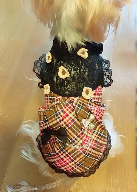 チェックが可愛い♡愛犬に着させたい英国調ケーブルフラワードレス
