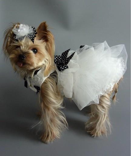 フワフワ軽やかなウエディングドレスで愛犬とステキな記念日を♪