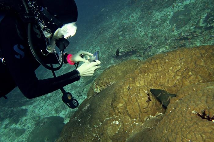 ダイビング中にも利用出来る防水スマホケース【MPAC+Dive】のご紹介