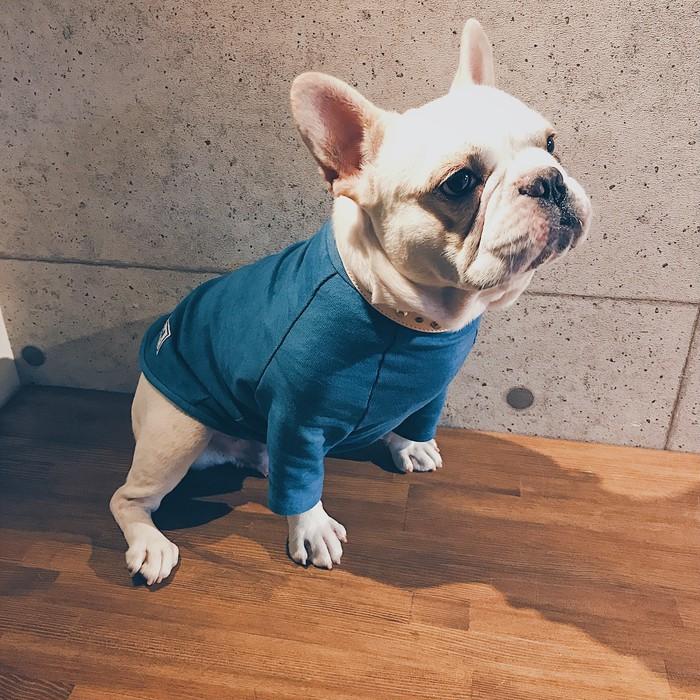 フレンチブルドッグとの秋のお出かけは、「藍染Tシャツ」でおしゃれに!