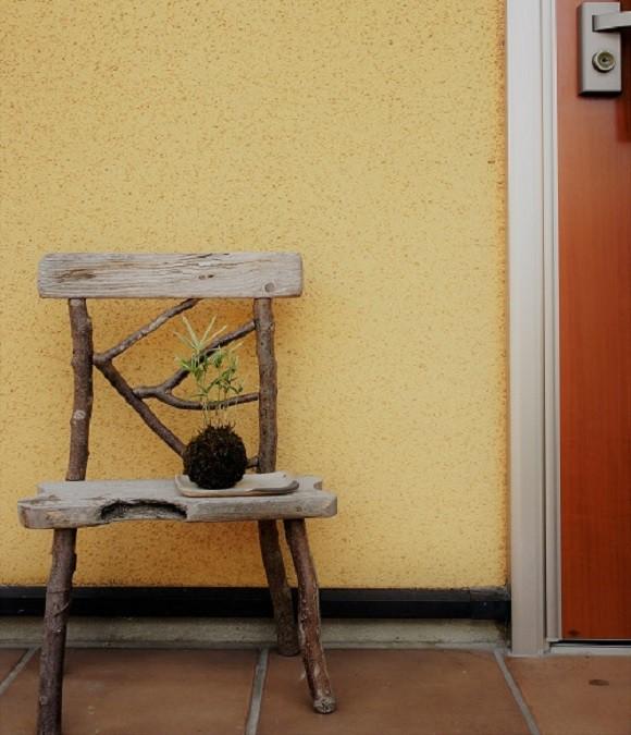 育てやすいのってどれですか。丈夫でとても育てやすい苔玉