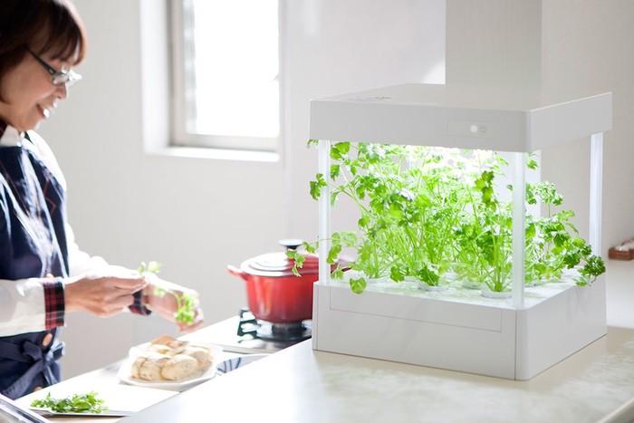 素敵な室内栽培、摘みたて新鮮野菜の収穫、ハーブの長期間栽培もできるアイティプランター