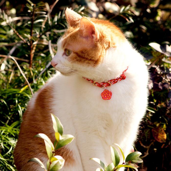 『和x猫』組紐首輪で猫に和のテイストを 機能性・デザイン性・安全性を兼ね備えた磁石式猫首輪