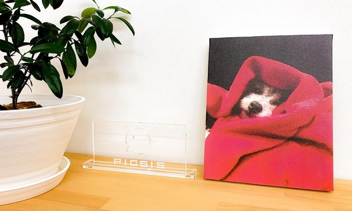 ペットの自慢したいお写真をイラスト風にしてキャンバスに印刷!