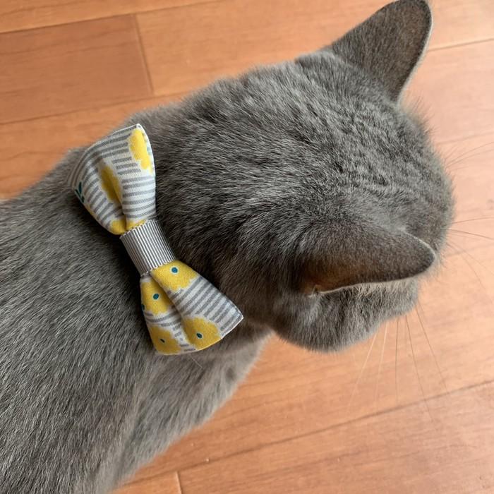 北欧テイストのぷっくりしたリボンがかわいい猫用ビッグリボン首輪!