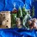 旬の宅配 野菜セット コロナの免疫力アップに