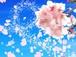 【No.12】ルームフレグランス(アロマミスト)
