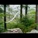 流木の鳥(L saiz) 146