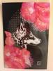 【夏雪】58 ポストカード椿と大神黒