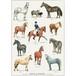 アート ポスター A4 サイズ KOUSTRUP & CO. - Horses & Ponies 馬とポニー