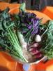アレルギーの人でも安心。季節のお任せ野菜セット