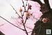 青葉の梅林~Plum grove~④
