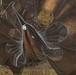 【USED】BENIGHTED LEAMS / Caliginous Romantic Myth