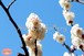 青葉の梅林2~Plum grove~②