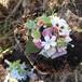 ビオラと野花のブローチ