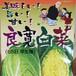 良寛白菜 種子  1.5ml