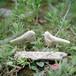 流木の鳥(S saiz) 253