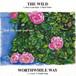 "the wild w/worthwhile way split 7"""