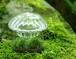 【苔テラリウム】小さなコケの森 きのこ瓶