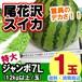 尾花沢スイカ <<ジャンボ7L/玉>>12kg×1玉