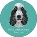 イングリッシュ コッカー スパニエル/ブルーローン《犬種名ステッカー/小型犬》