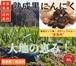【業務用】青森県産 黒にんにく バラ80g 【送料無料】 【最低ロット:30パック】 セット販売 産地直送