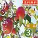 【令和元年予約受付中】青森県津軽産りんご【サンふじ】優品 3Kg/箱【送料無料】