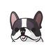ボストンテリア(大) 犬ステッカー