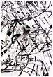 大橋麻里子 / Mariko Ohashi《drawing-4》