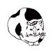 野良猫 Wild cat