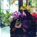 黒竹籠の花贈り