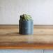 Cereus peruvianus monstrosus + Iron pot(M)
