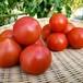 カジルIGTV特別セット『うえの農園』の採れたてトマト